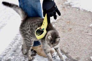 cat.jpg 3
