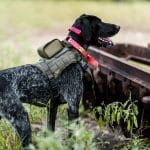 SafeShoot Defender on Dog Back Angle – reduces friendly fire casualties statistics