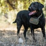 SafeShoot Defender on Dog – reduces friendly fire casualties statistics